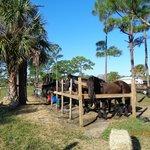 Horse rentals at the park