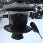 Bird feeder outside dining room window