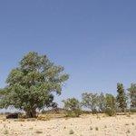 Shady tree by Finke River