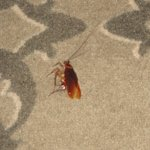 Altro scarafaggio ucciso