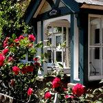 Brampton Roses