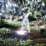 Fuente en Jardín botánico Selva Verde