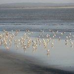 Gabbiani sulla spiaggia di essaouira
