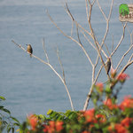 birding from your dinning table