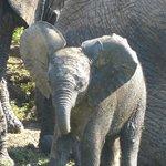 Morgensafari (Wasserloch der Elefanten)