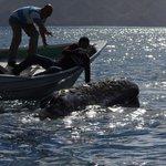 Tocando ballena