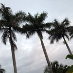 Palm trees on the grounds