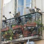gatti .... con balcone