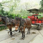 Our Two Faithfull Donkeys & Wagon