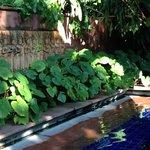 緑が多いプール