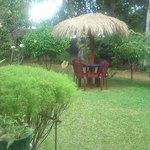 Plantation tropical garden