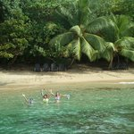 The Beach Bar is hidden behind the Palm Trees