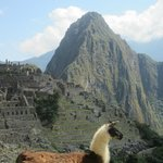 A llama hanging out at Machu Picchu
