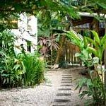 Our amazing tropical gardens
