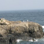 View from nubble