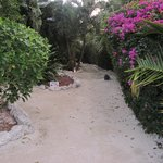 Path that leads from bar, pool to rooms