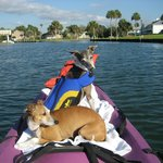 dogs on kayak, canal next to hotel