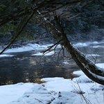 Missisquoi river 4