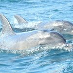 Dolphins at Freycinet