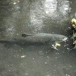 lago de peixes