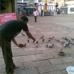 Aaq feeding the pigeons inside the temple