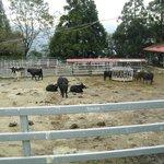 Farm at Maple-trail