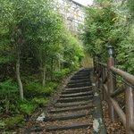 Maple-trail path