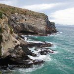 Taiaora Head, Otago Peninsula, seals and birdlife