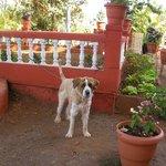 'SADU HOTEL DOG... PROTECT HOTEL