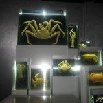 Krabben und anderes Getier