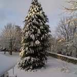A Snowy Tree in the Garden