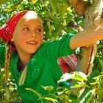 Apple Hill Growers photo by John Flinn
