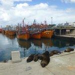 Típica postal del puerto, barcos y lobos marinos
