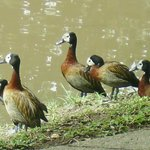 Birdlife at Dieu-Donnee