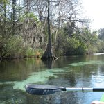 day out on the river -  kayak shack weeki wachee - PLEASE VISIT GREAT DAY OUT