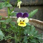 Beatiful flower in Garden, there are plenty eyecatching