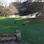 black swans by the lake