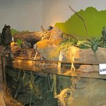 Inside the Discovery Center:  Fish and turtles.