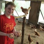 Gathering Eggs in the Chicken Coop