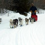 having a great time dog sledding as arranged by Linda