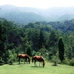 Enjoy the horses in their natural state from the lodge porch