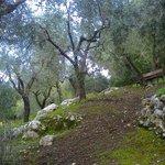 passeggiata nell'oliveto nel giardino della struttura