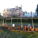 Source of Newbolds free range eggs