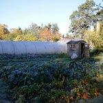 The garden at Newbold