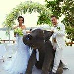 elefanten bringen dem brautpaar glueck