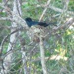 Birds nest.