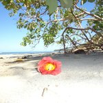 Strand in Cahuita