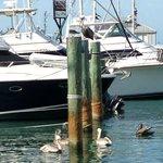 Key West Marina.