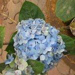 Flowers at MTDC Resort