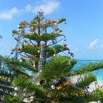 The X-mas tree